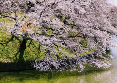 千代田区立九段坂公園